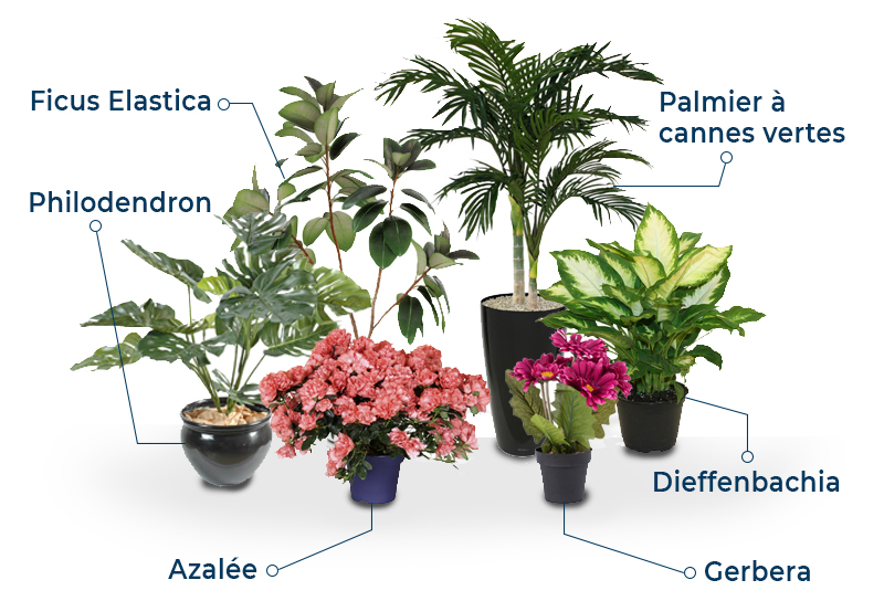 purifer intérieur plantes vertes homewell Immobilier nicolas leyvraz romain louia