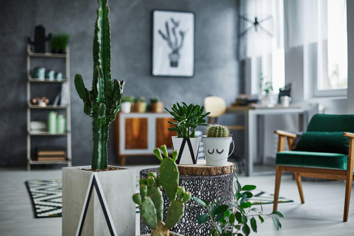purifer intérieur plantes vertes